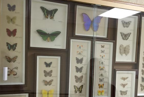 Interesting insects: Dr. Wingler's legacy kept in display cases